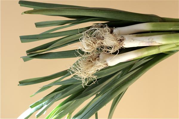 Spring Garlic 2