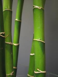greenbamboo1.jpg