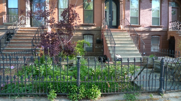 Bedstuy brownstone front yard